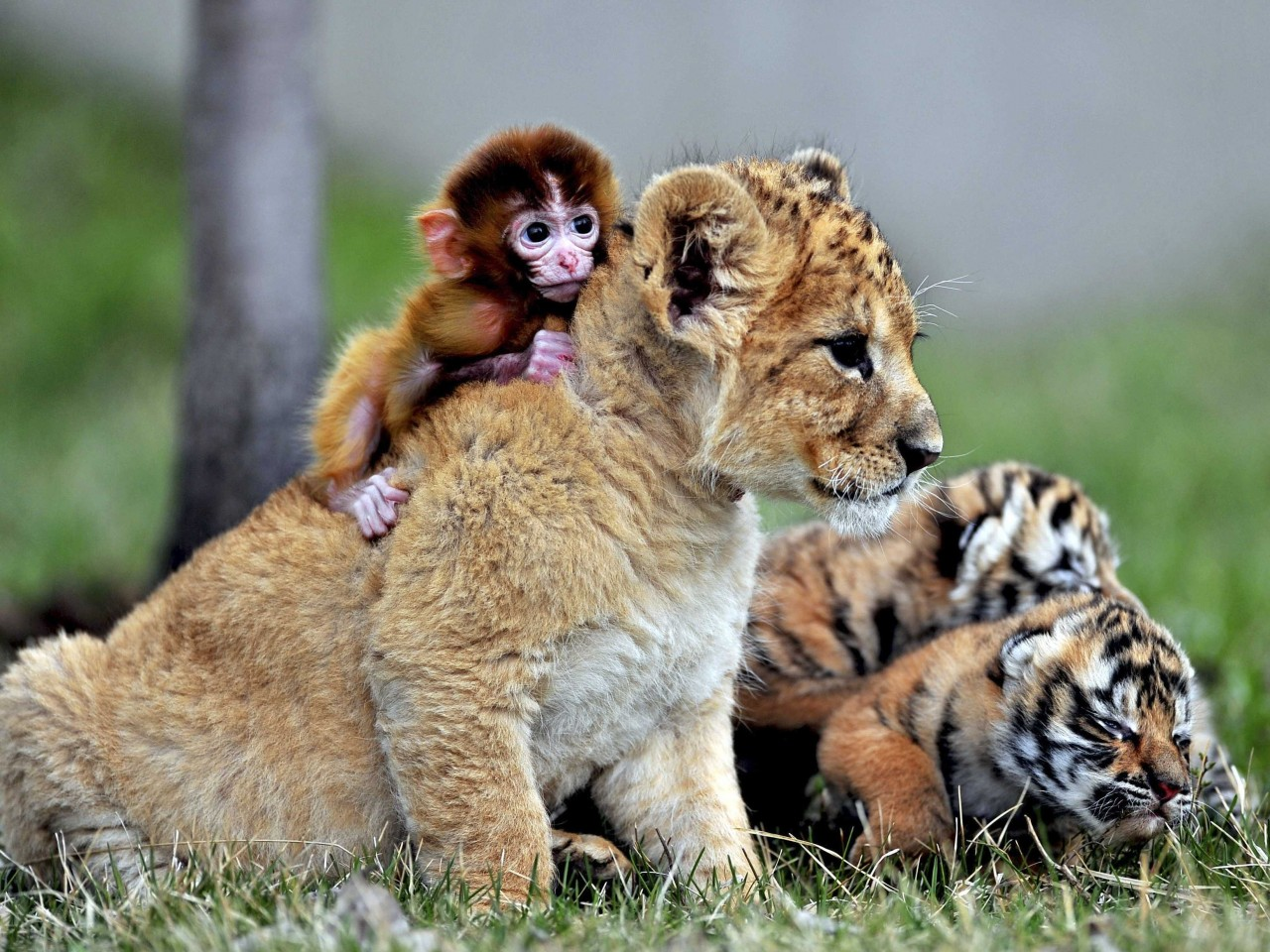 Different Species of Animals Who are Best of Friends