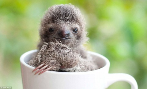 Baby Sloth Has the Cutest Reactions Ever