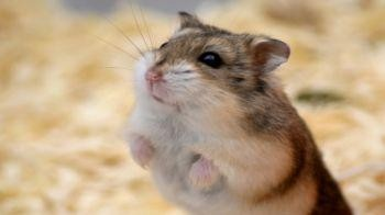 Fun and Cute Hamsters Chilling Out